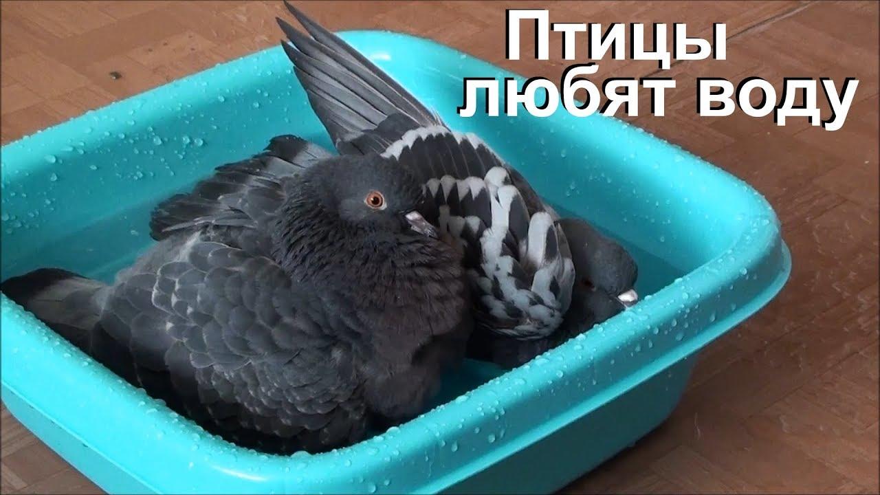 Птицы любят воду