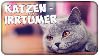 Die größten Katzen-Irrtümer! Die häufigsten Irrtümer und Märchen über Katzen!