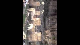 видео Недорогие путевки в Бурунди в Бужумбуру