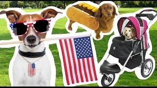 Psy i inne zwierzęta w USA, sklep zoologiczny