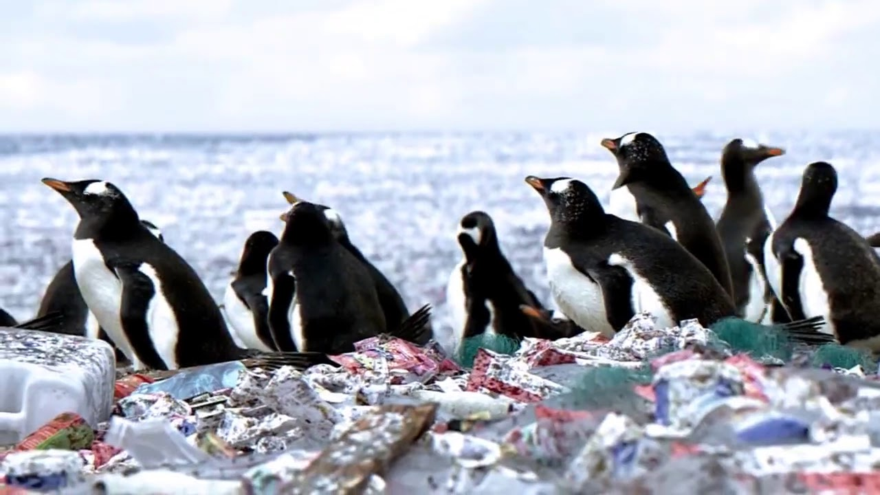 Image result for penguins on rubbish island