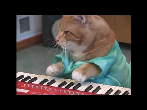 Morreu Bento, o gato que tocava piano
