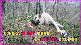 Трогательная история о собаке, которая 10 лет прожила у могилы хозяина