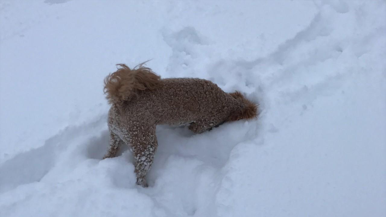 Watch dogs snow / Thunderbirds movie full movie