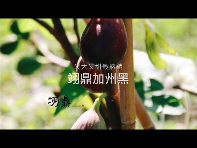 三個無花果品種一次介紹!又大又甜最熱銷、特甜的特色品種、好種又豐產的品種