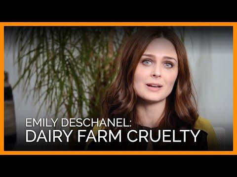 Emily Deschanel Reveals Shocking Dairy Farm Cruelty