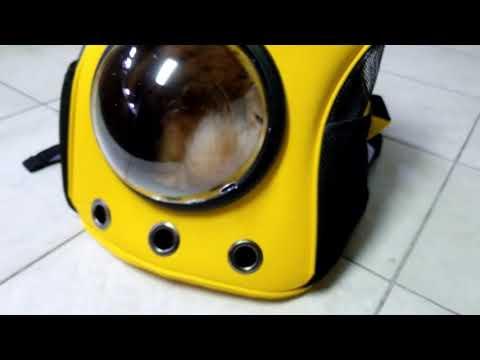 Astronaut Pet Cat Carrier Travel Backpack Bag