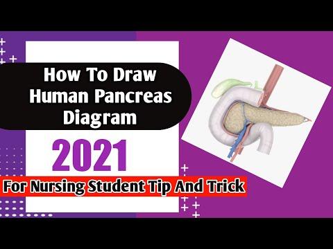 How draw pancreas diagram  YouTube