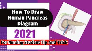 How draw pancreas diagram