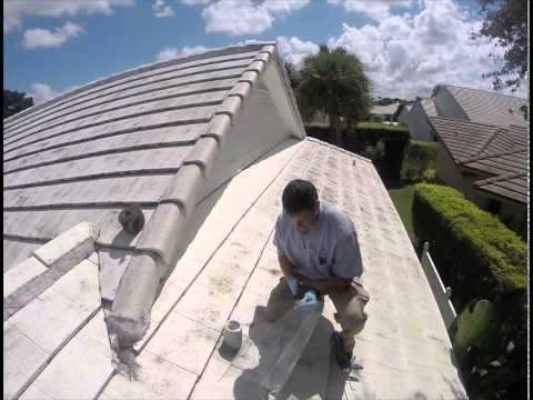 Pest Control | How to Rodent-Proof Your Home | Exterminator in Vero, Jupiter | Nozzle Nolen