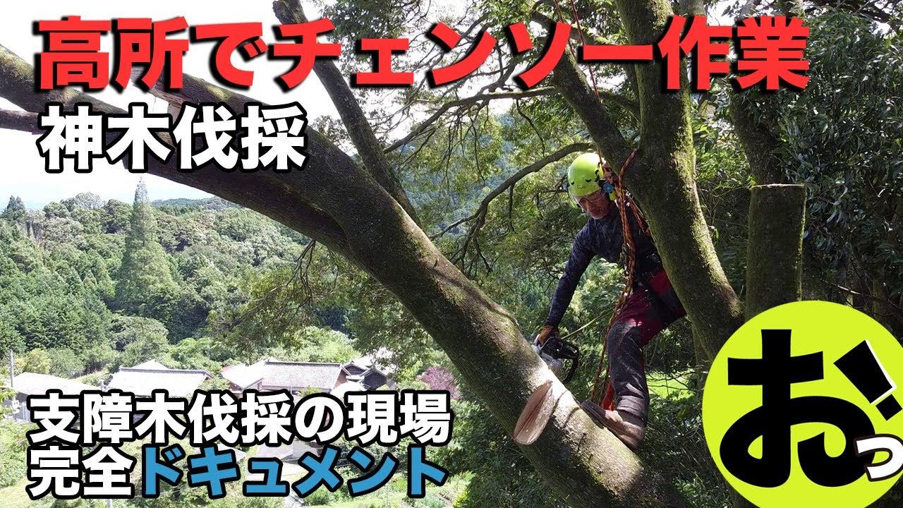 【ドキュメント】神木伐採〜高齢化集落を守る支障木伐採チームの姿(いつもと違ってかなりまじめな動画です)