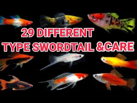 TOP 29 DIFFERENT TYPES OF SWORDTAIL FISH \u0026 CAER | SWORDTAIL VARIETY |