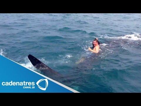 Tiburón asusta a turistas en playas de Yucatán / Shark scares tourists on beaches Yucatan