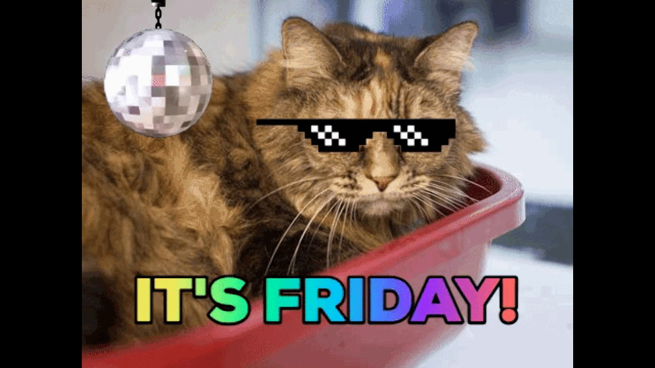HAPPY FRIDAY FROM THE CATS - YouTube