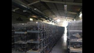Chinchilla Real Fur | Ферма на 3000 Шиншилл | Визит  в Латинскую Америку