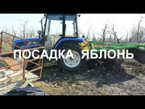 Посадка яблонь Голден дилешес Флорина Эрли женева.   Planting Of Apple Trees Golden