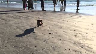 Iphone 6+: Puppy Running In Slow Motion