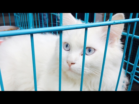 Crawford Market Mumbai Pets in Cheap Rates (Original Breeds) Highlights