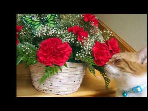 National Cat Day 2017. Titan&Elvis