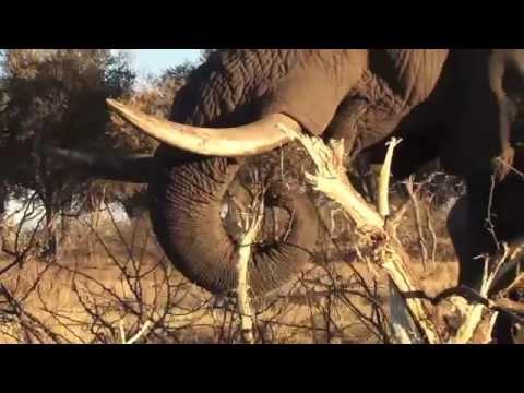 Botswana Africa Ker & Downey Family Adventure
