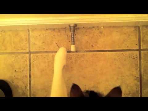 Cat vs door stop youtube - Cat door stoppers ...