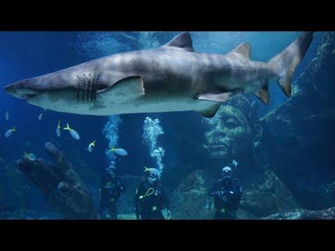 Sea Life Ocean World Bangkok | Siam Ocean World - Full View