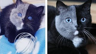 Rare Kitten Born With 'Two Faces' Grows Up Into The Most Beautiful Cat Ever!