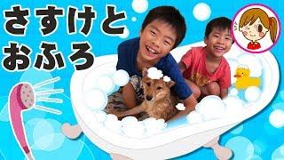 がんばれ!柴犬さすけくん 【おふろ編】 お風呂がきらい 兄弟でペットのお世話 アンパンマン おもちゃ みーたんおねえさん thumbnail