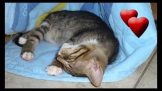 Katzenpfötchen Karpathos