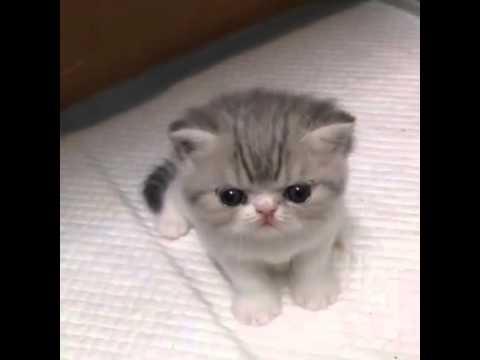 small kitty mew