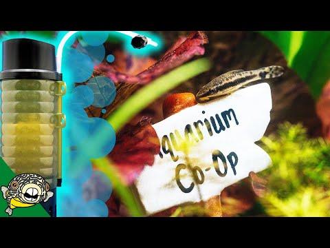 Lets End This Hype Train On The Ziss Bubble Bio Filter- Aquarium Co-Op