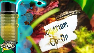 where-to-buy-aquarium-plants-online