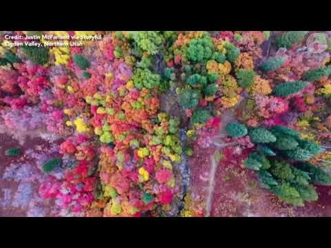 Dazzling display: Colorful foliage ushers in autumn in northern Utah
