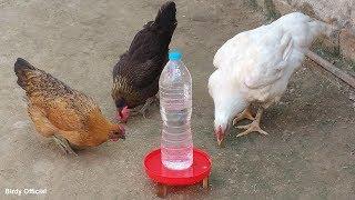 How To Make A Chicken Waterer | DIY Chicken Water Feeder Homemade