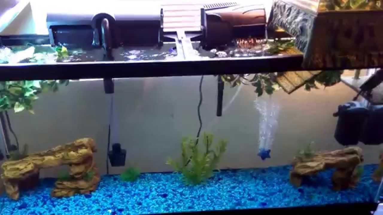 55 gallon turtle tank update   YouTube
