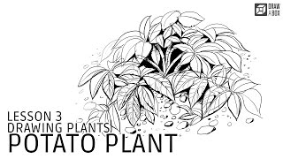 Drawabox Lesson 3: Potato Plant Demo
