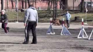 Чемпионат СЗФО по аджилити, 01-02.05.13 г. СПб, Невская, v55