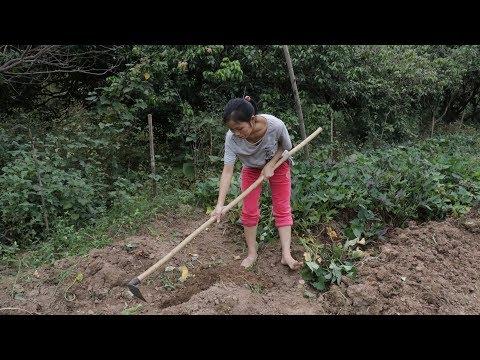 农村姑娘地里挖红薯,忽然锄头下去感觉不对劲,吓得立马后退两步