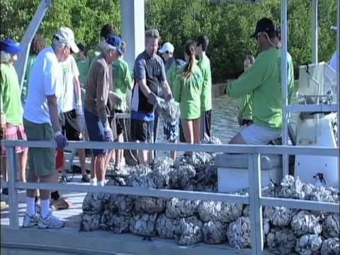 Oyster Reef Restoration 2010