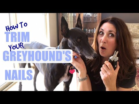 How to Trim your Greyhound's Nails
