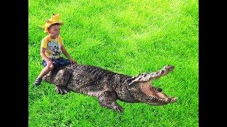 VLOG Крокодиловая ферма шоу крокодилов Крокодил челлендж The Million Years Stone Park Crocodile Farm