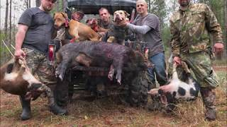 Hog hunting with dogs 2019 02 02