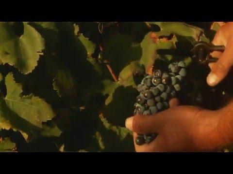 Delicata: Malta's new generation of winemakers
