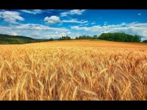 Всеукраинская Акция!Получи свои законные 2 гектара земли!