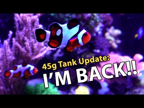 Fish Disappeared?!! Back from Asia (45g - 2/25/2017)