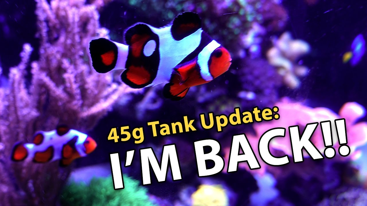Fish in tank disappeared - Fish Disappeared Back From Asia 45g 2 2