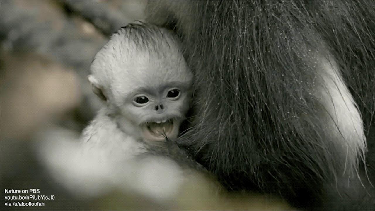 Weird Monkey Pictures 11