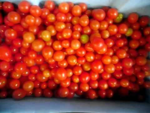 Earthworks Organic Produce