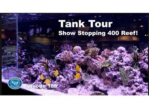 Tank Tour:  Show Stopping 400 reef!