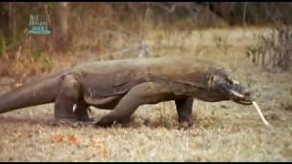 Prehistoryczne Bestie odc 6 Gigantyczna jaszczurka